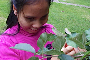 Anna touching an apple tree